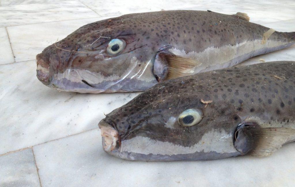 ψάρια στη θάλασσα δωρεάν site γνωριμιών